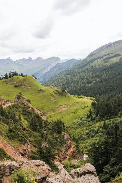 Ingyenes stockfotó a vadonba, domb, erdő témában