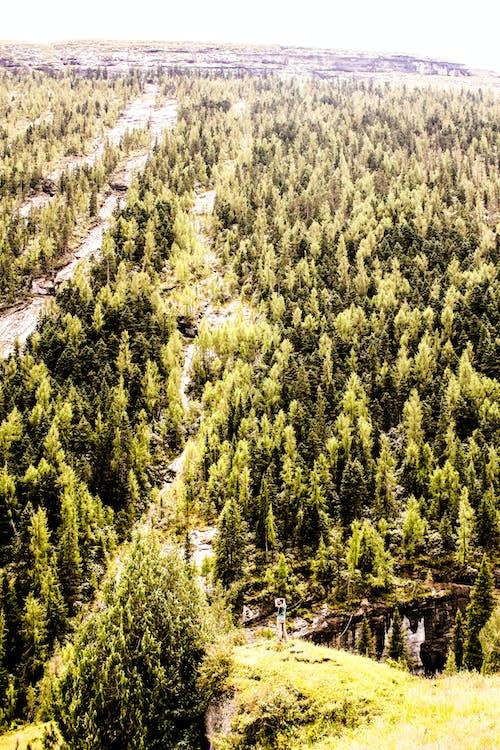 Ingyenes stockfotó erdő, gyönyörű táj, gyönyörű természet témában