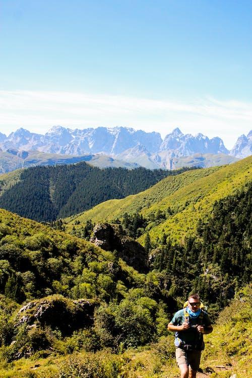 Ingyenes stockfotó a vadonba, erdő, gyönyörű táj témában