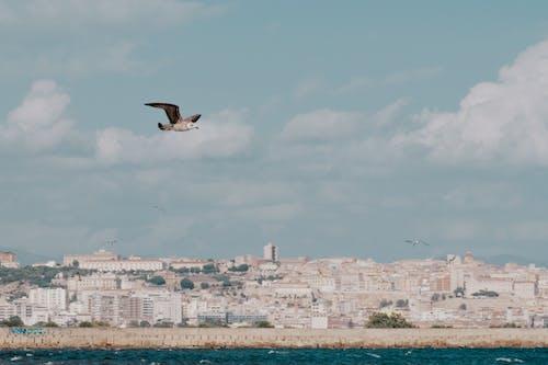 Безкоштовне стокове фото на тему «Fujifilm, архітектура, берег моря»