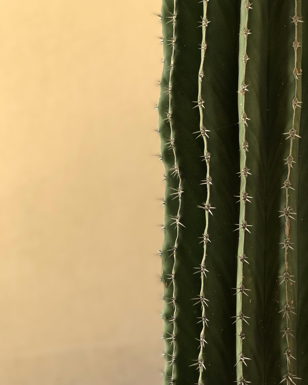 Macro Shot of Green Cactus