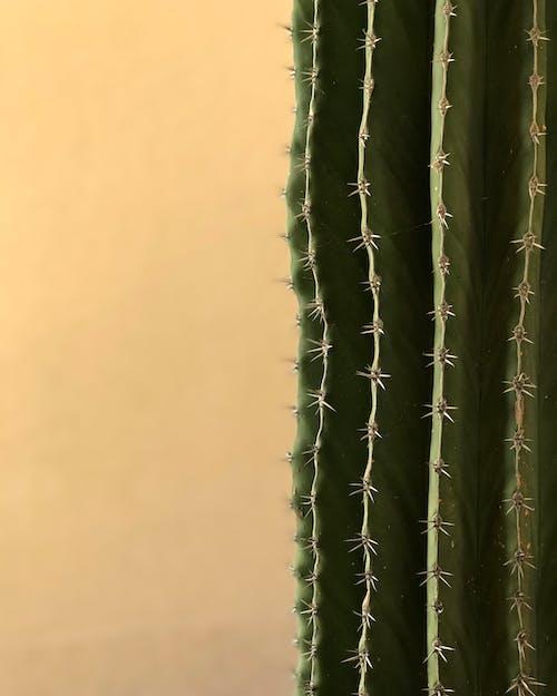 Kostenloses Stock Foto zu exotisch, farbe, grün, kaktus