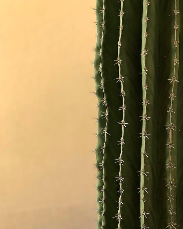 acéré, aiguisé, cactus