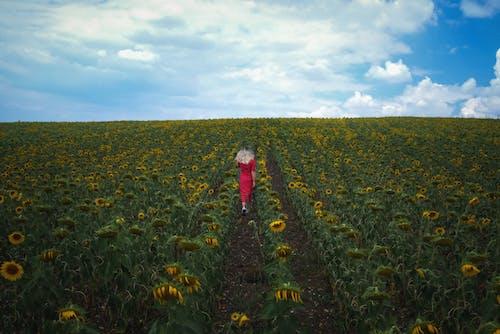 Photos gratuites de agriculture, campagne, clairière