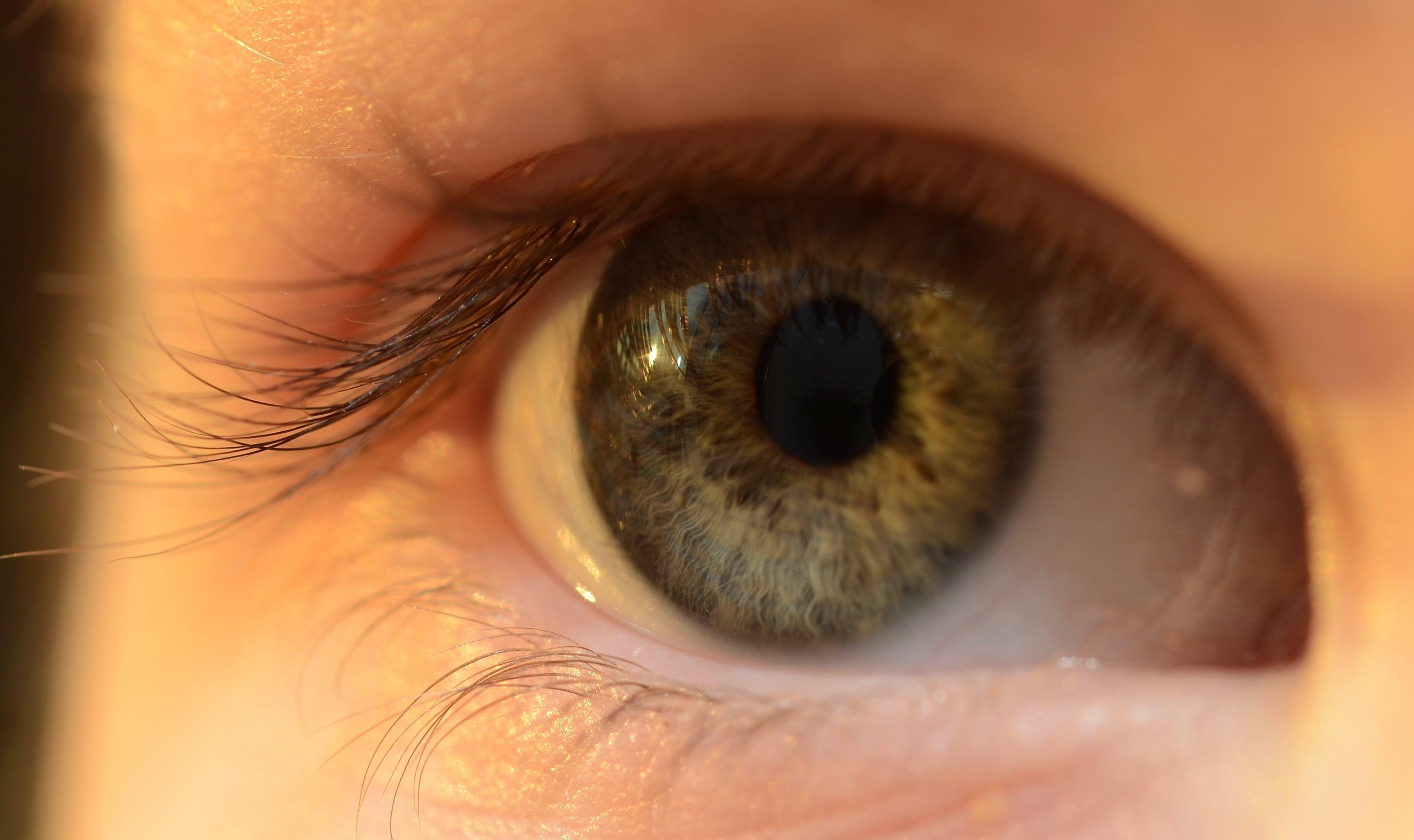 eye, eyelash, eyelid