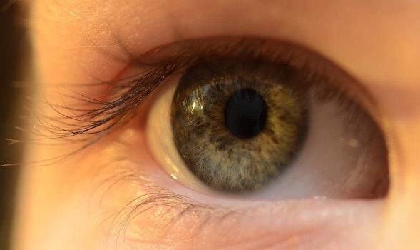 Free stock photo of lens, eye, organ, iris