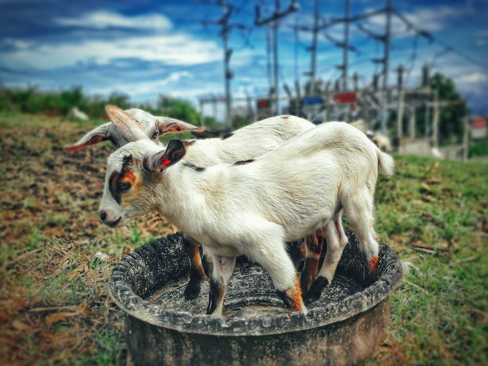 animais selvagens, animal, animal da fazenda