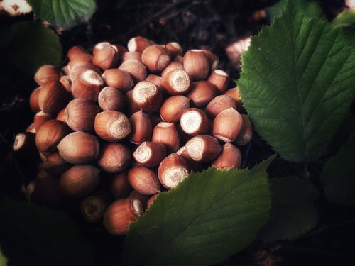 Brown and White Round Fruits