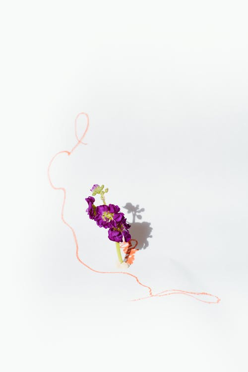 copy space, 꽃, 꽃 머리의 무료 스톡 사진