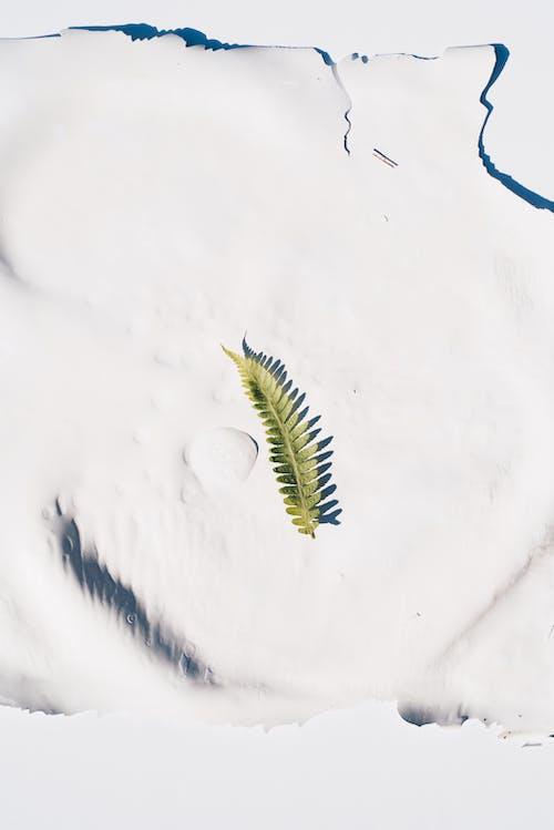 겨울, 눈, 바로 위의 무료 스톡 사진