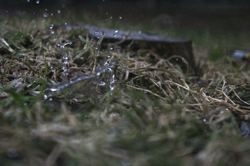Free stock photo of rain drops