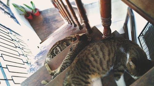 Základová fotografie zdarma na téma domácí mazlíček, fotografování zvířat, kočky, ležet