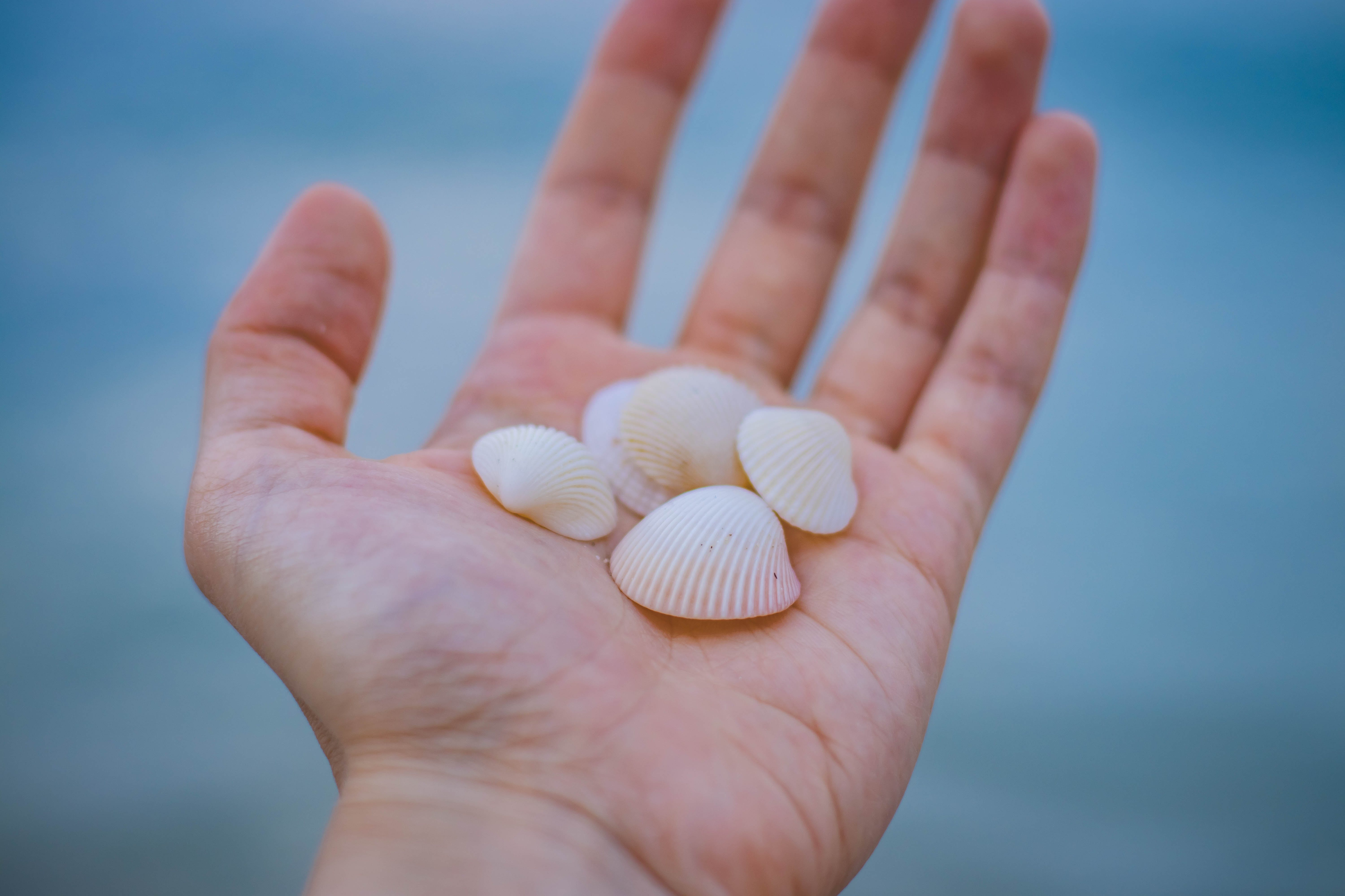 Sea Shells in Person's Hand