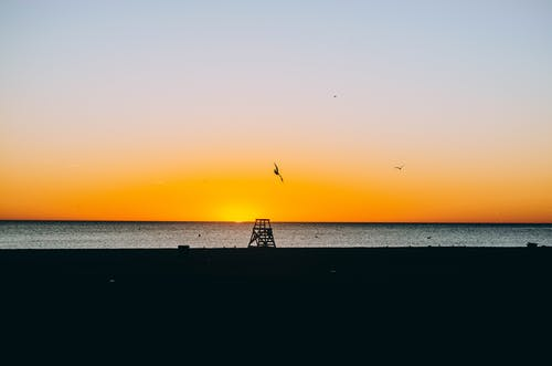 Free stock photo of beach, early morning, seagulls