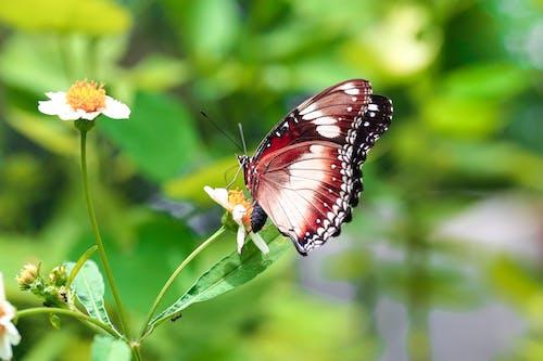 Foto stok gratis binatang, kupu-kupu, makro, mentega