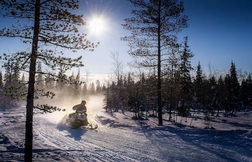 Immagine gratuita di alberi, cielo sereno, gatto delle nevi