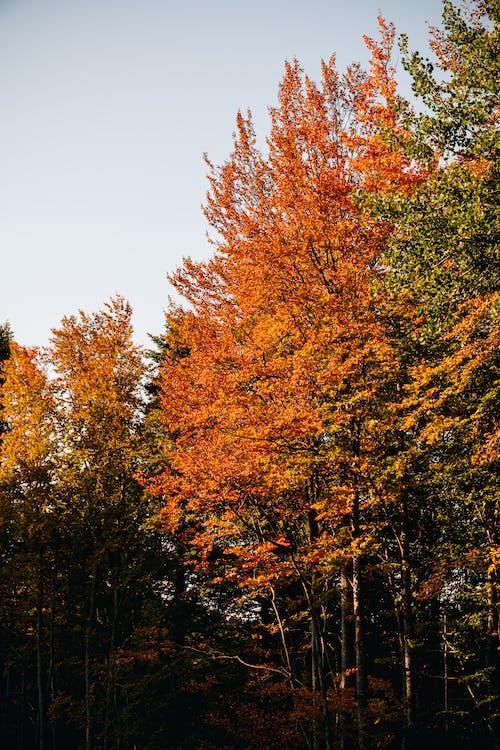 Gratis lagerfoto af brune blade, efterår, efterårsblade
