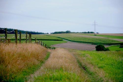Foto profissional grátis de cerca, estrada, grama, madeiras