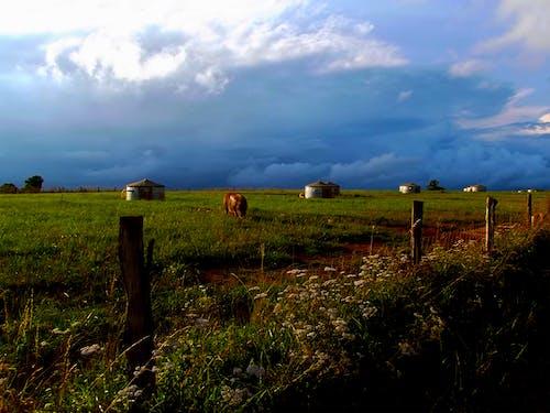 Foto profissional grátis de cerca, flores, grama, nuvens