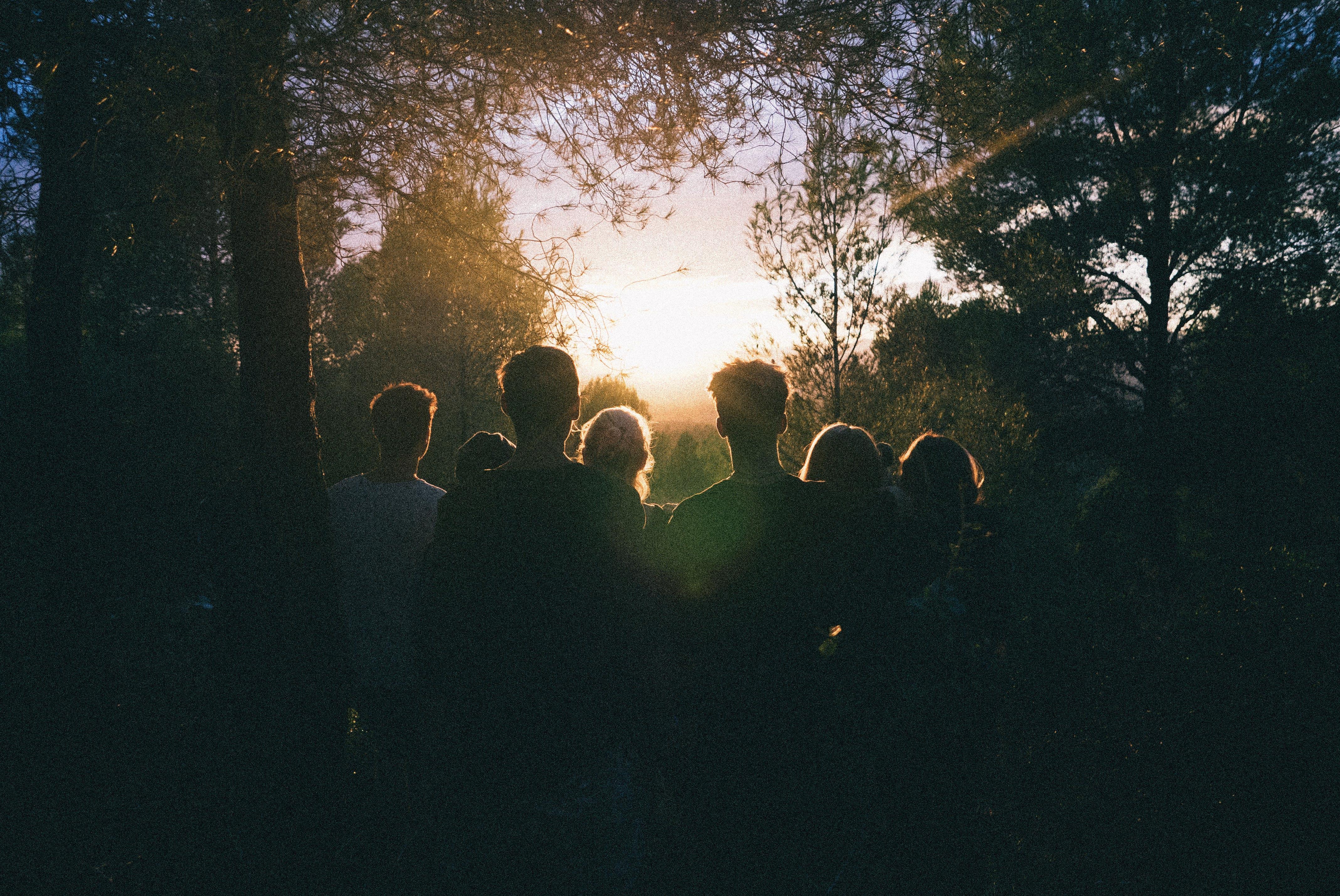 Silhouette of Group of People Between Tree Line