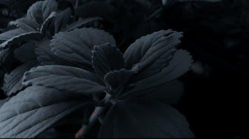 Free stock photo of garden plants, green leaf