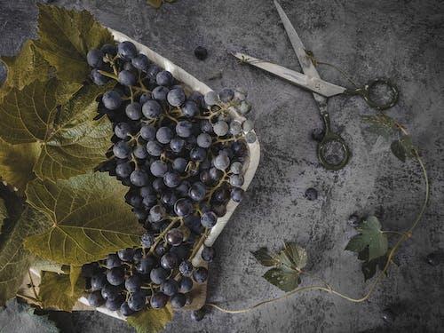 Безкоштовне стокове фото на тему «веганська їжа, винний завод, вино»