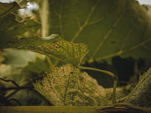 Безкоштовне стокове фото на тему «Безхребетні, біологія, вересень»