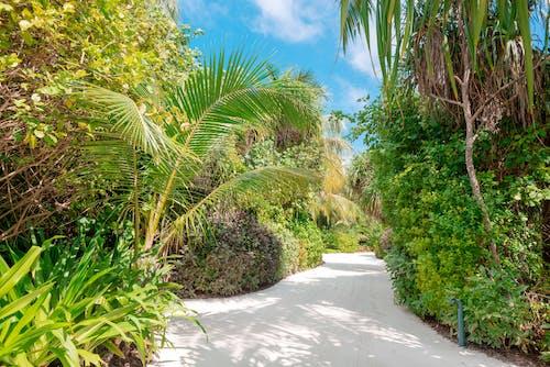 Green Palm Trees Near White Concrete Road Under Blue Sky