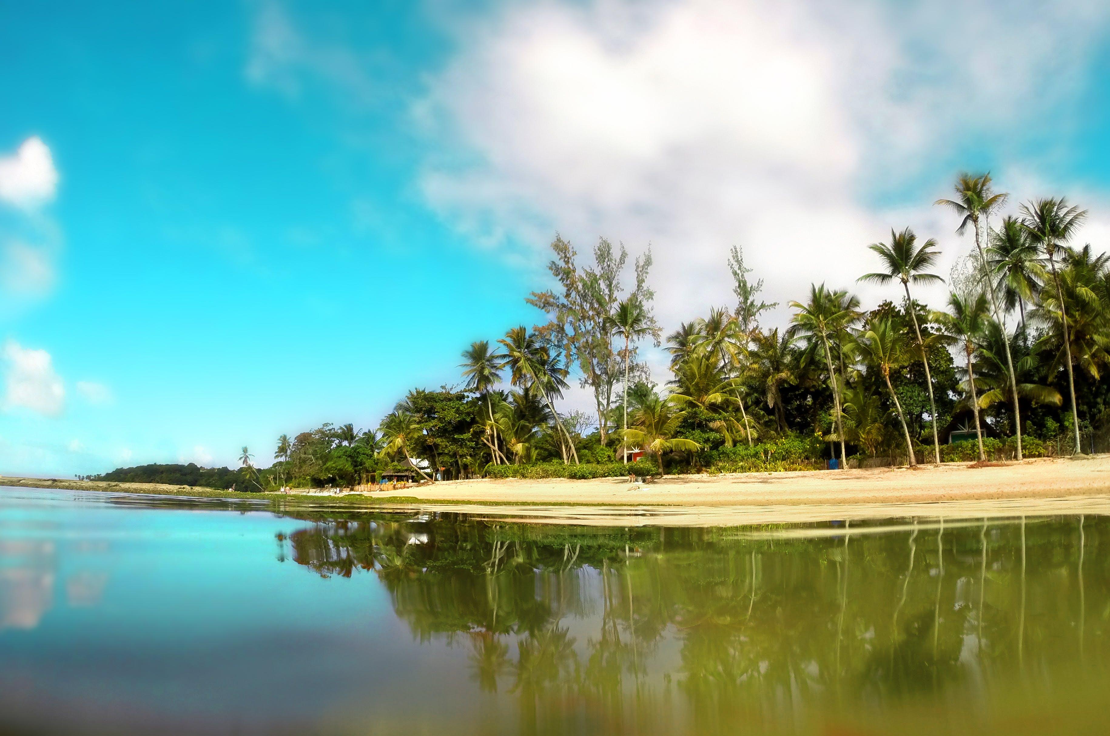 Kostenloses Stock Foto zu bäume, himmel, kokosnussbäume, landschaft
