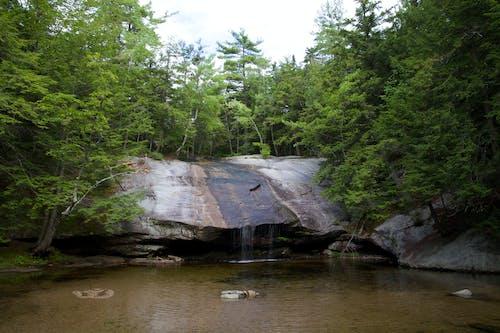 Foto stok gratis air, alam, batu, hutan