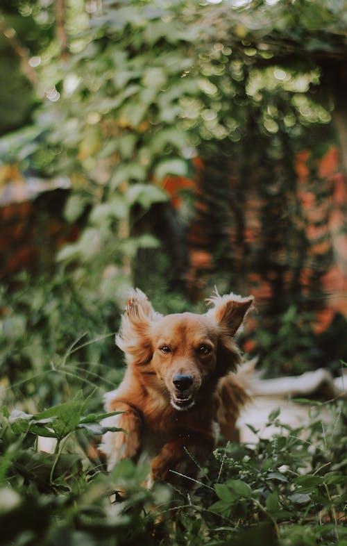 Бесплатное стоковое фото с боке, голова собаки, дерево, домашний