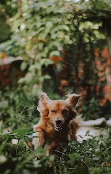 Medium-coated Tan Dog Running on Green Plants Photography