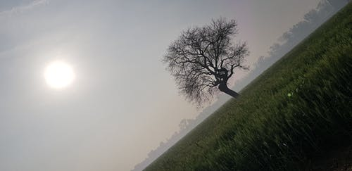Free stock photo of clear sky, farm, field, golden sun