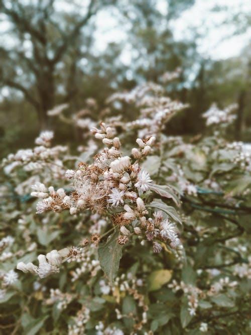 คลังภาพถ่ายฟรี ของ กลางแจ้ง, กลีบดอกไม้, ก้าน