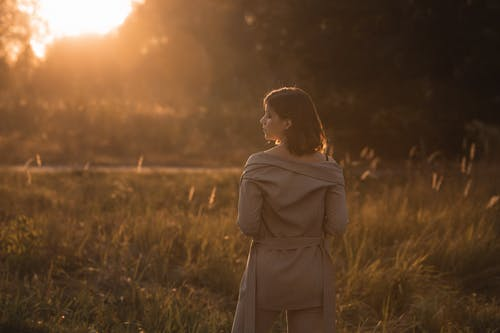 Immagine gratuita di alba, autunno, cadere