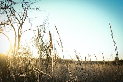 Gratis arkivbilde med gress, himmel, soloppgang, solskinn