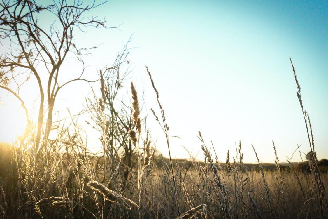Brown Grass Under the Sun and Blue Sky
