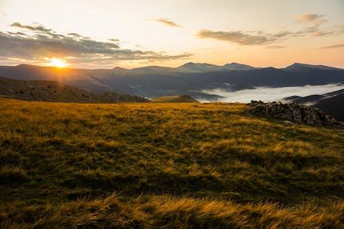 คลังภาพถ่ายฟรี ของ ดวงอาทิตย์, ตอนเย็น, ตะวันลับฟ้า, ทุ่งหญ้า