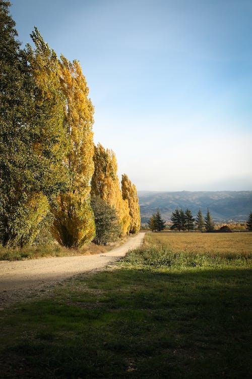 Ảnh lưu trữ miễn phí về alexandra, cây, New Zealand, núi