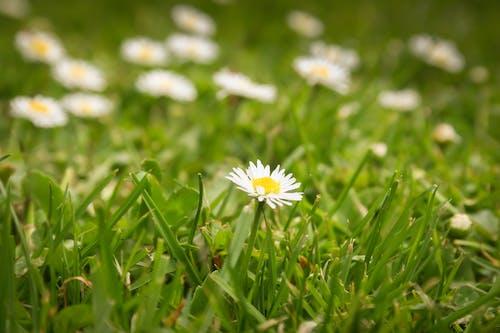 Ảnh lưu trữ miễn phí về bãi cỏ, cỏ