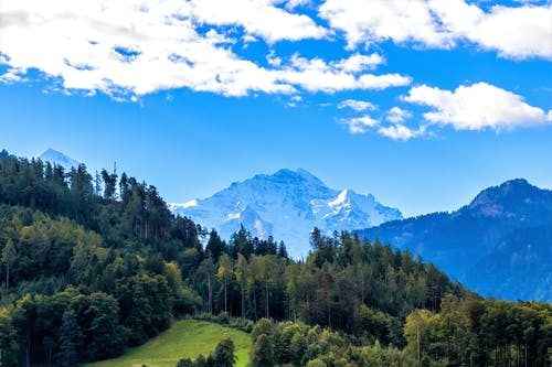 구름, 나무, 눈, 소나무의 무료 스톡 사진
