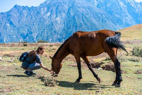 乾草地, 乾草田, 動物 的 免費圖庫相片