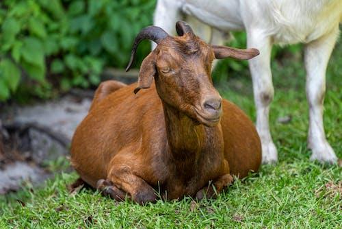 Бесплатное стоковое фото с agbiopix, дикая природа, животное