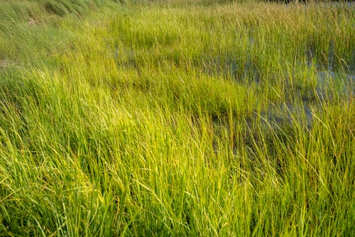 Бесплатное стоковое фото с морская трава