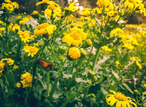 Ảnh lưu trữ miễn phí về ánh sáng mặt trời, cận cảnh, cánh hoa, cây