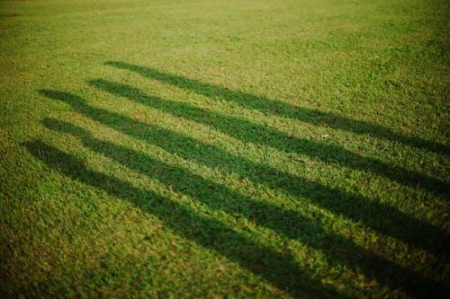 Foto profissional grátis de ao ar livre, área, árvore
