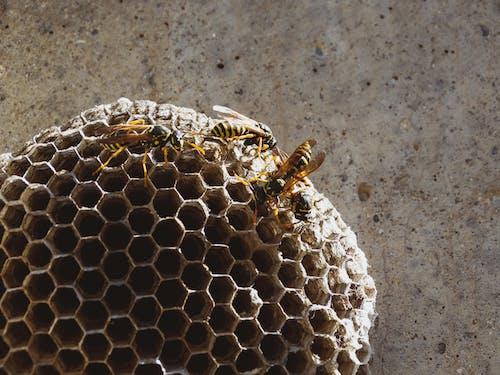 Fotobanka sbezplatnými fotkami na tému abeja insekto, abejorro, aire libre
