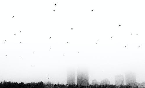 城市 的 免费素材照片
