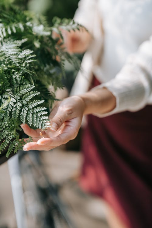 Person Holding Green Pine Cone