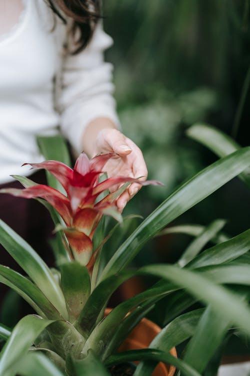 Женщина, касающаяся цветка бромелии